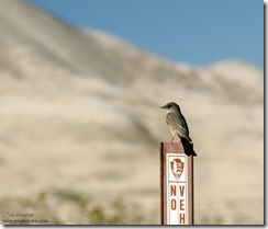 Says Phoebe Kelso Dunes Mojave National Preserve California