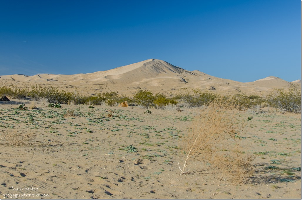 Kelso Dunes from camp Mojave National Preserve California