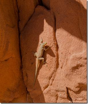 Lizard White Pocket Vermilion Cliffs National Monument Arizona