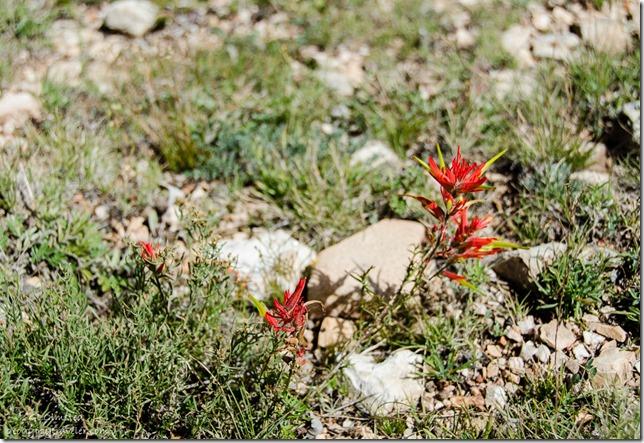 Paintbrush East Rim Kaibab National Forest Arizona