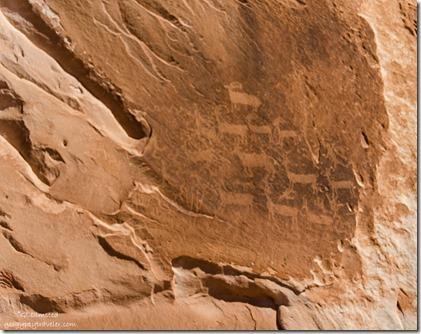 Petroglyphs White Pocket Vermilion Cliffs National Monument Arizona