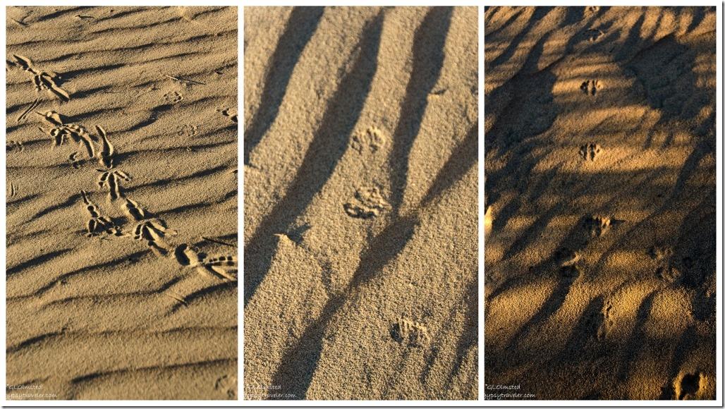 Tracks in sand Kelso Dunes Mojave National Preserve California
