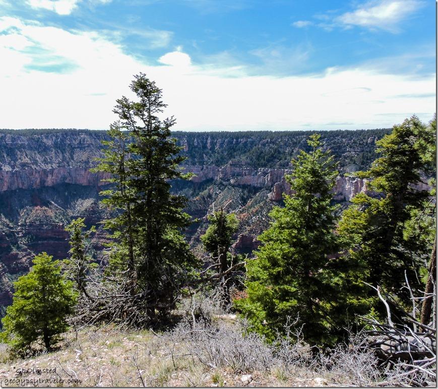 Across Transept Canyon Widforss Plateau North Rim Grand Canyon National Park Arizona