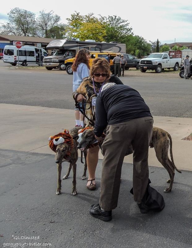05s DSCN6479clerw Greyhounds Earthfest Parade Kanab UT g-3 (620x800)