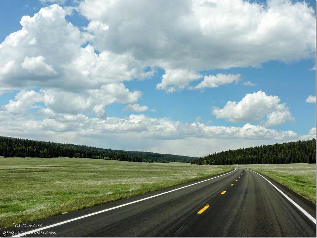 Meadows SR67 North Kaibab National Forest Arizona