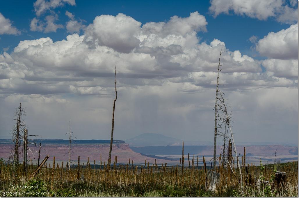 Paria Plateau & Navajo Mountain thru 2006 Warm Fire SR67 Kaibab National Forest Arizona