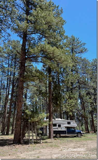 Forest camp Kaibab National Forest Arizona