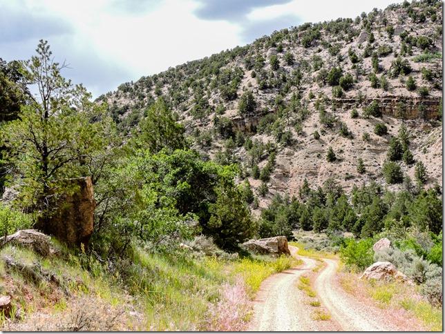 FR423 West Kaibab National Forest Arizona