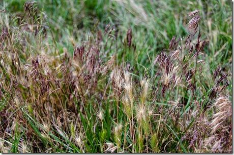 Grasses Snake Gulch Kaibab National Forest Arizona