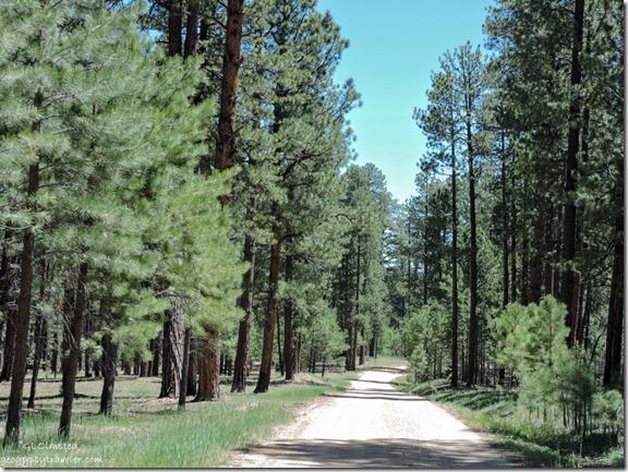 Kaibab National Forest Arizona