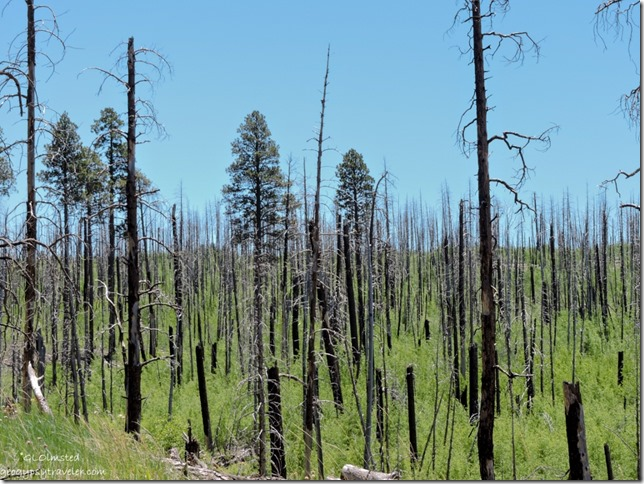 2006 Warm Fire Kaibab National Forest Arizona