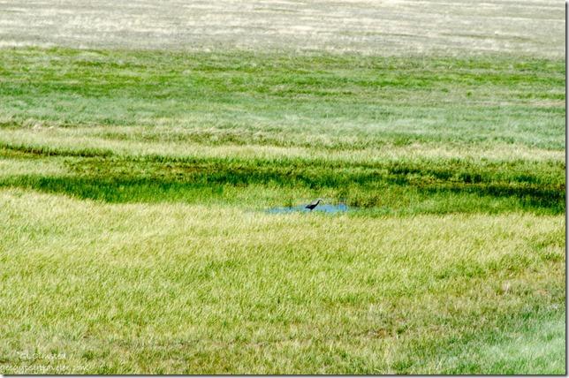 Blue Heron pond meadow SR67 Kaibab National Forest Arizona