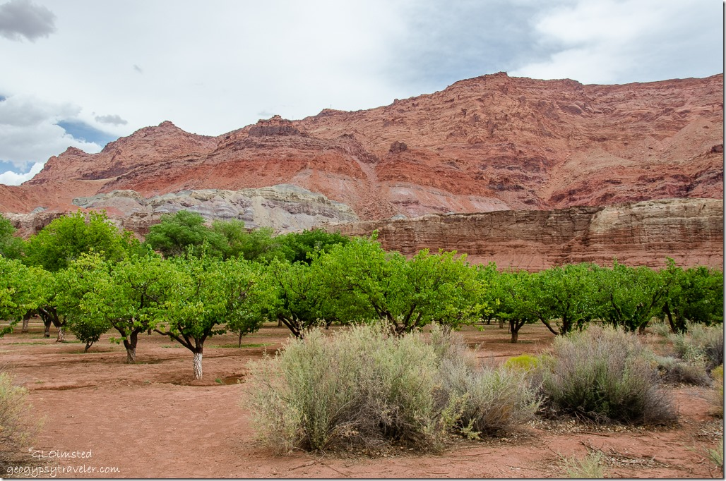 Lonely Dell Ranch orchard Lees Ferry Glen Canyon National Recreation Area Arizona