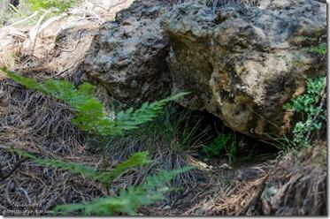 Burrow under rock Widforss trail North Rim Grand Canyon National Park Arizona