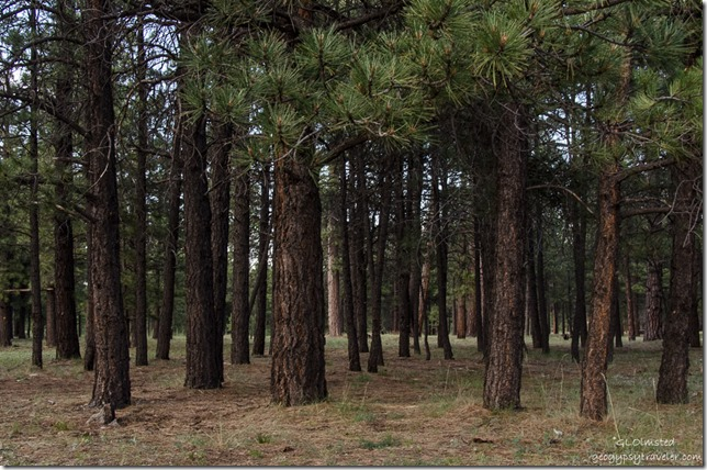 Forest Mile & a Half Lake camp SR212  Kaibab National Forest Arizona