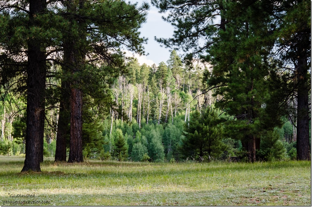 Mile & a Half Lake camp SR212 Kaibab National Forest Arizona