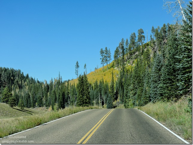 Fall aspen SR67 North Rim Grand Canyon National Park Arizona