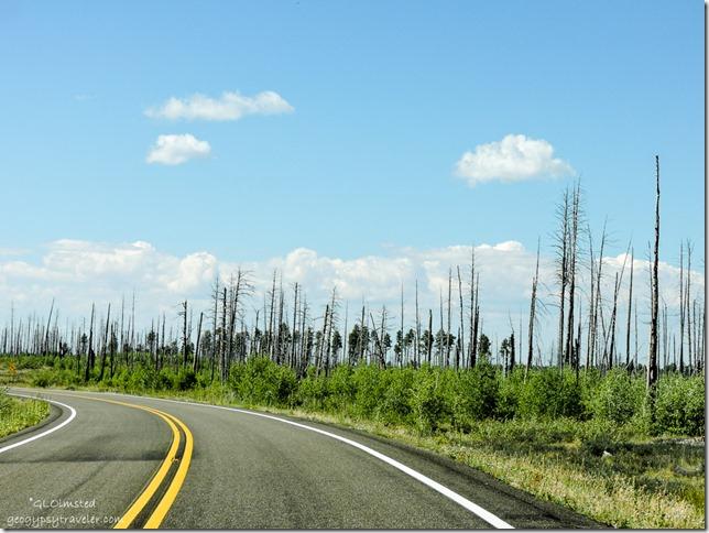 2006 Warm Fire SR67 Kaibab National Forest Arizona