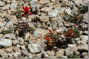Paintbrush Marble View Kaibab Kaibab National Forest Arizona