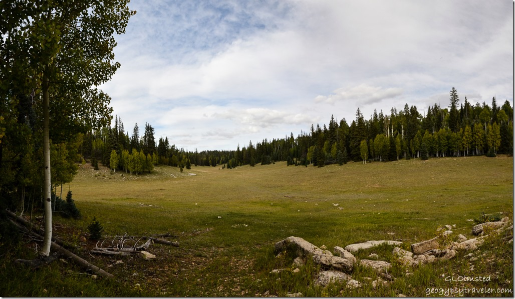 Arizona trail meadow Kaibab Kaibab National Forest Arizona