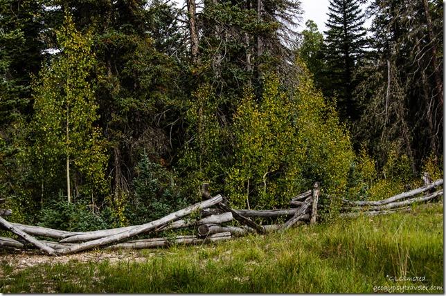 Fall aspen & fence Kaibab Kaibab National Forest Arizona