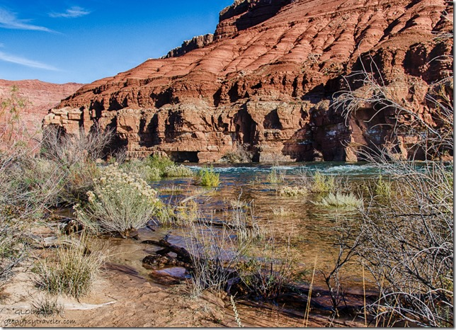 Floatsom Colorado River Lee's Ferry Glen Canyon National Recreation Area Arizona