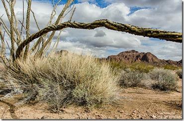 Ocotillo KOFA Mountains King Road BLM Arizona