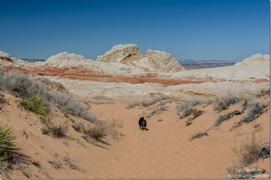 Sasha White Pocket Vermilion Cliffs National Monument Arizona