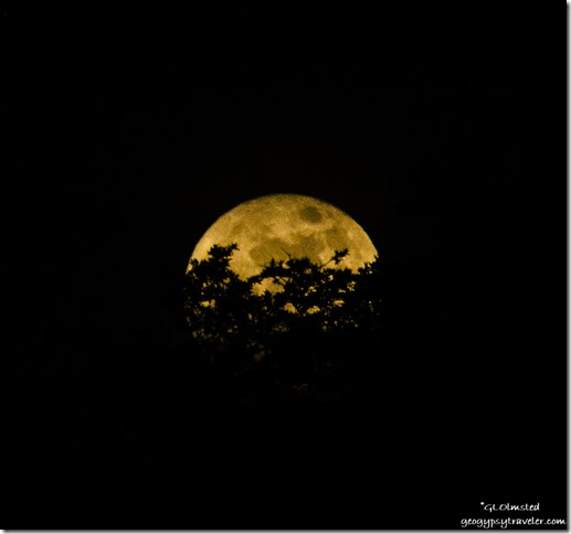 Super moon rise behind trees Yarnell Arizona