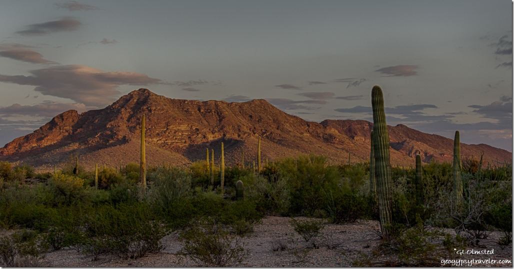 Sunset saguaros Darby Well Road BLM Ajo Arizona