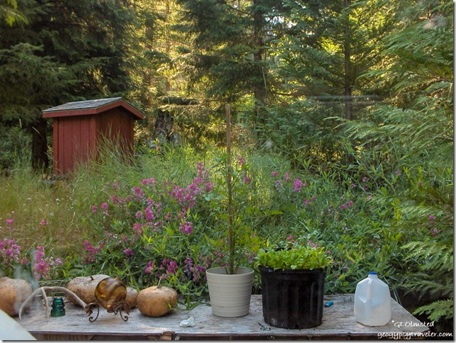 East view and garden at Cave Creek campground Siskiyou National Forest Oregon