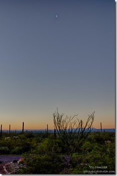 Sunrise crescent moon Organ Pipe Cactus National Monument Arizona