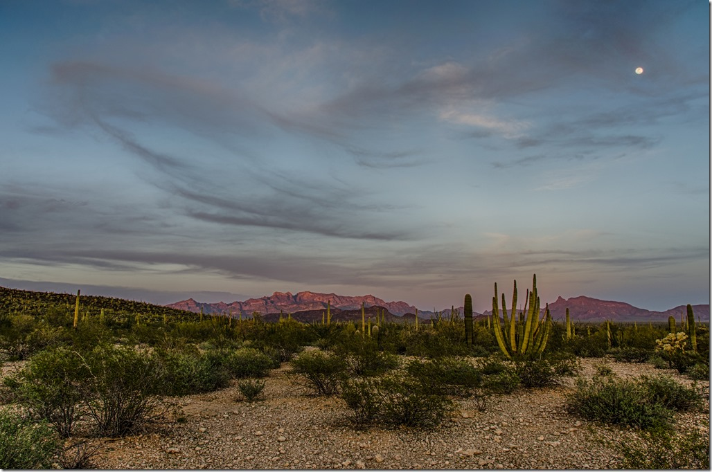 Sunset light Ajo Range & moon Organ Pipe Cactus National Monument Arizona