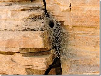 spiderweb Mosaic Canyon Death Valley National Park California