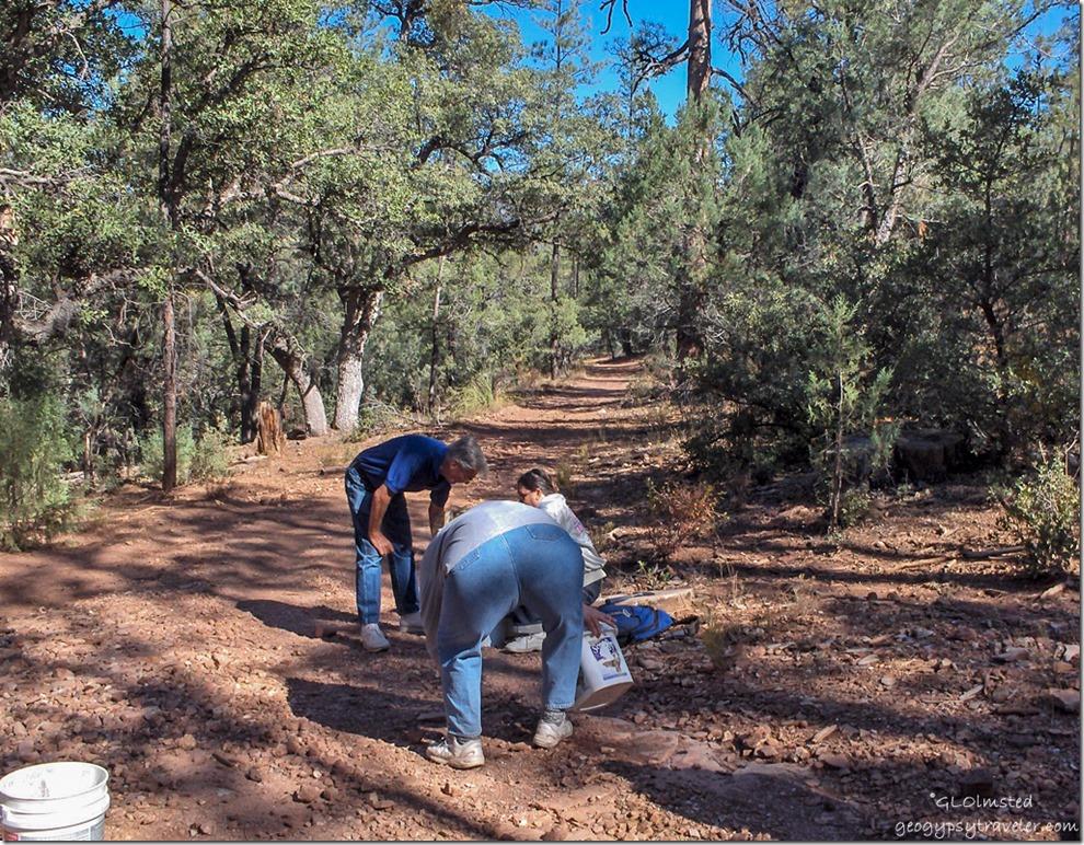 Rockhounding near Pine Arizona