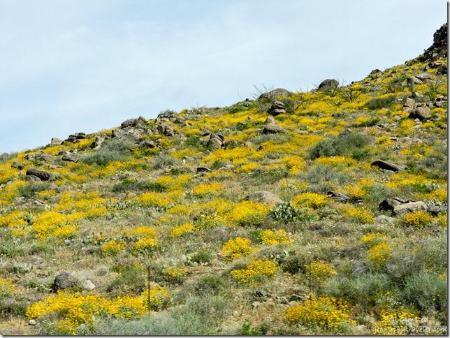 flowers Weaver Mountains Yarnell Hill SR89 Arizona