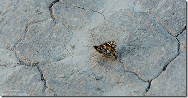 butterfly dry lake bed Fossil Falls BLM Little Lake California