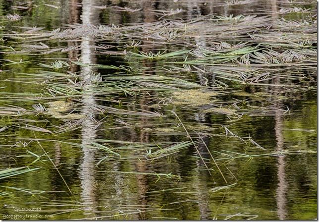 reflections grasses Greenland Lake North Rim Grand Canyon National Park Arizona