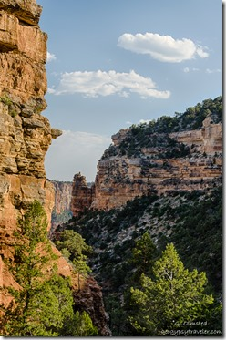 canyon view from Cliff Spring trail North Rim Grand Canyon National Park Arizona
