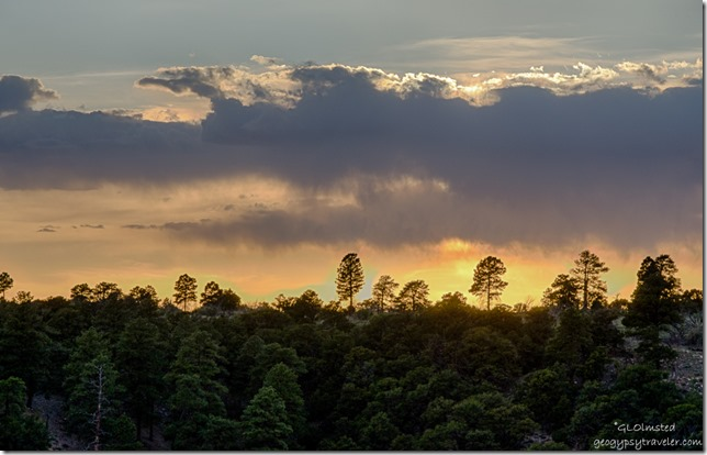 sunset forest Cape Royal North Rim Grand Canyon National Park Arizona