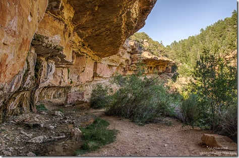spring Cliff Spring trail North Rim Grand Canyon National Park Arizona