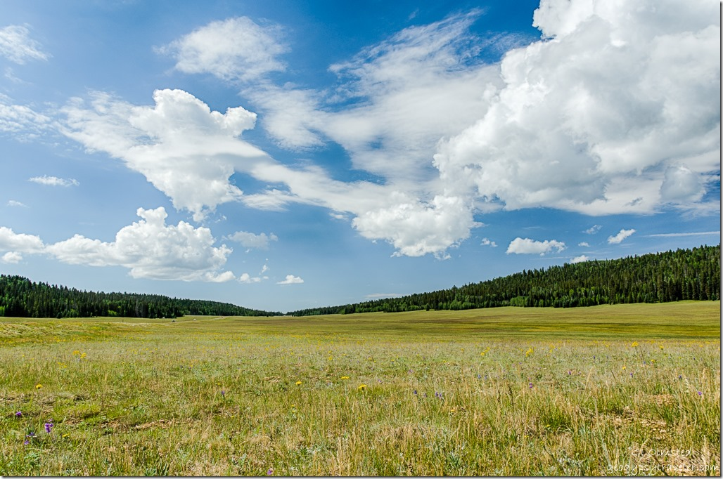 clouds meadow wildflower Kaibab National Forest Arizona
