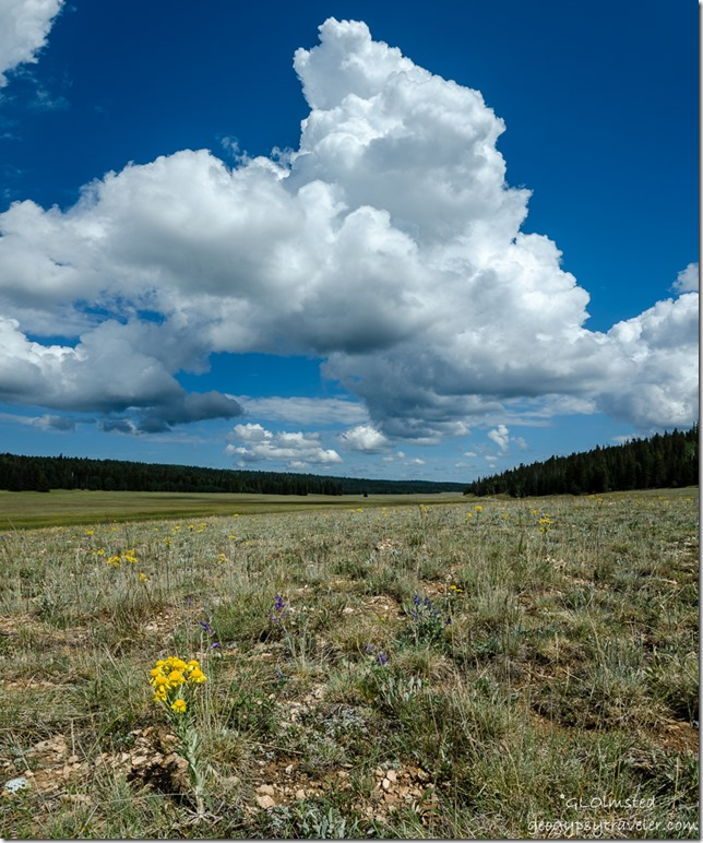 clouds meadow flowers Kaibab National Forest Arizona