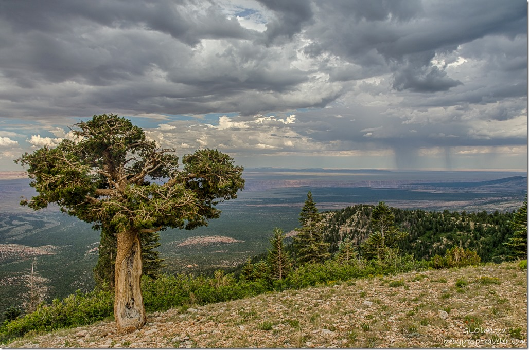 old pinyon pine valley stormy sky Marble View Kaibab National Forest Arizona