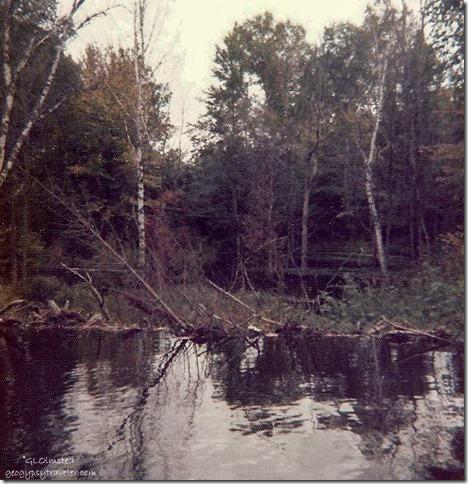 Beaver dam on overflow upper penninsula Michigan