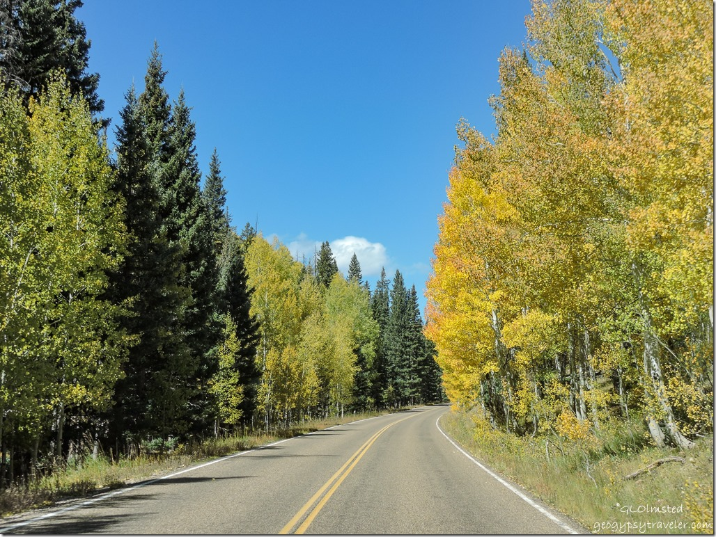 Fall colors SR67 North Rim Grand Canyon National Park Arizona