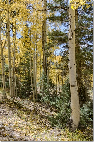 Fall colors FR610 Kaibab National Forest Arizona