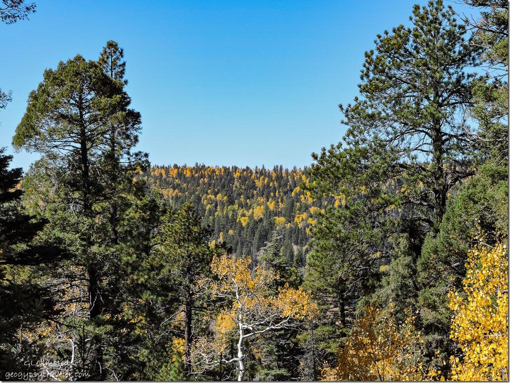 fall aspen everygreens FR611 Kaibab National Forest Arizona
