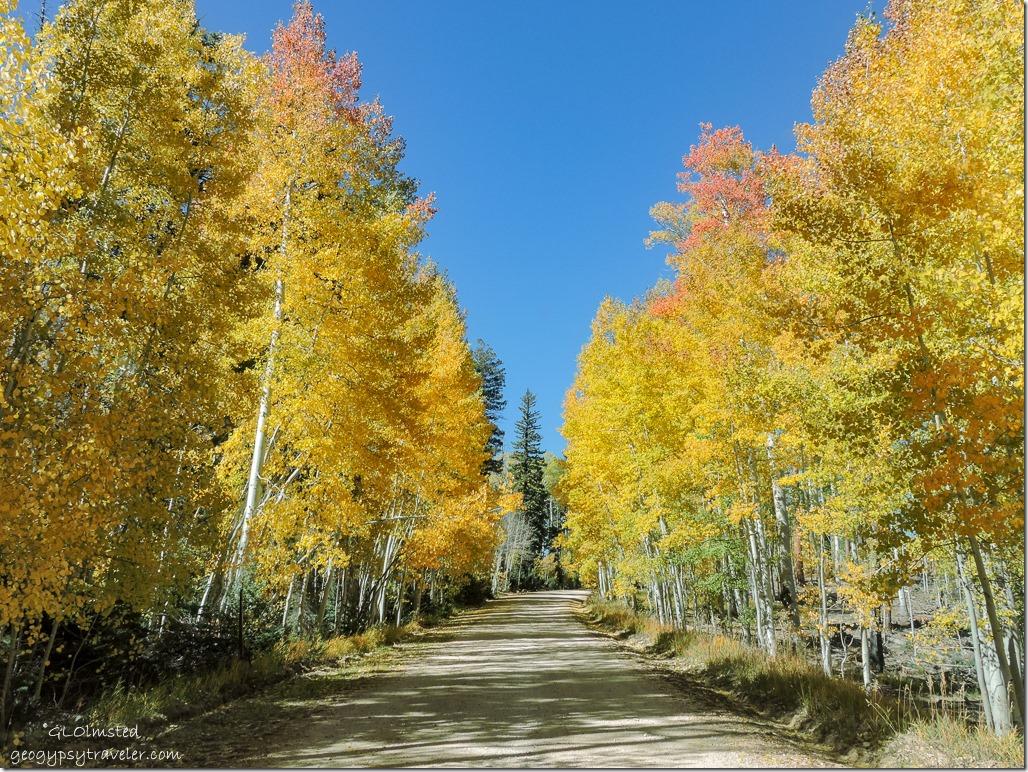 fall aspen FR611 Kaibab National Forest Arizona