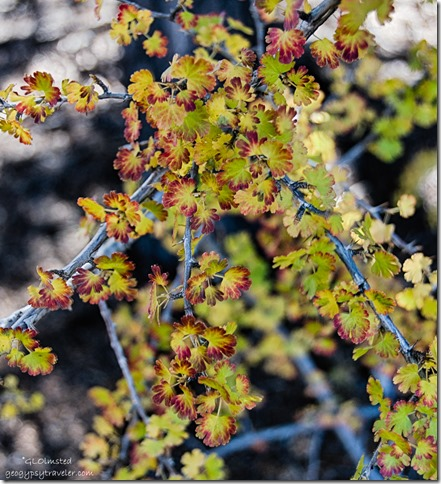 fall color Gooseberry Cape Royal traill North Rim Grand Canyon National Park Arizona